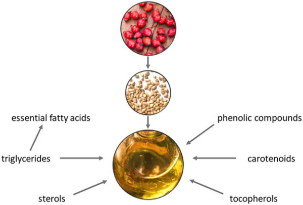 rosehip seed oil